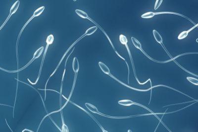 El varón SI importa en fertilidad
